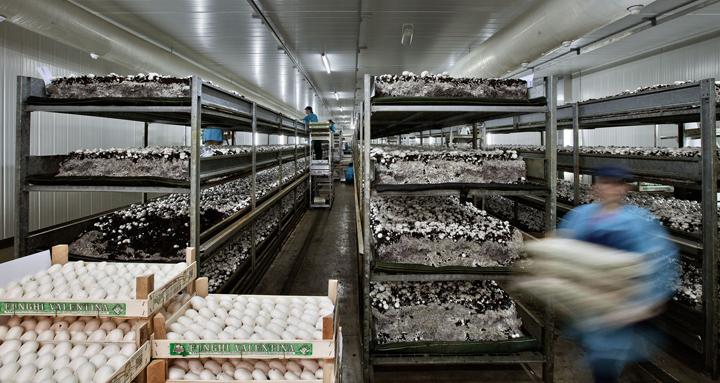 coltivazione funghi biologici in azienda